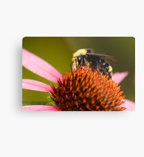 Bright-Eyed and Bushy-Tailed Pollinator of Flowers Metal Print