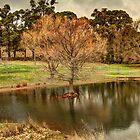 Swamp Cypress (Taxodium distichum) #2 by Elaine Teague
