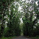 Tunnel of Trees by Mary Ellen Hurley