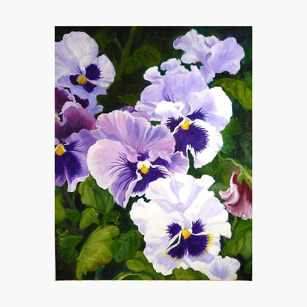 Pansies Delight #1(sold) Photographic Print