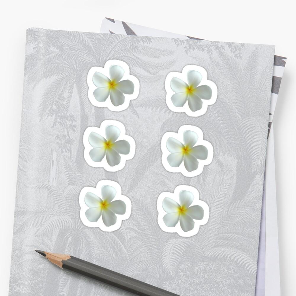 Frangipani - Weiß und Gelb Sticker