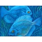 Blue Discus Fish, Underwater Art by clipsocallipso