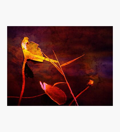 Red as Blood Photographic Print