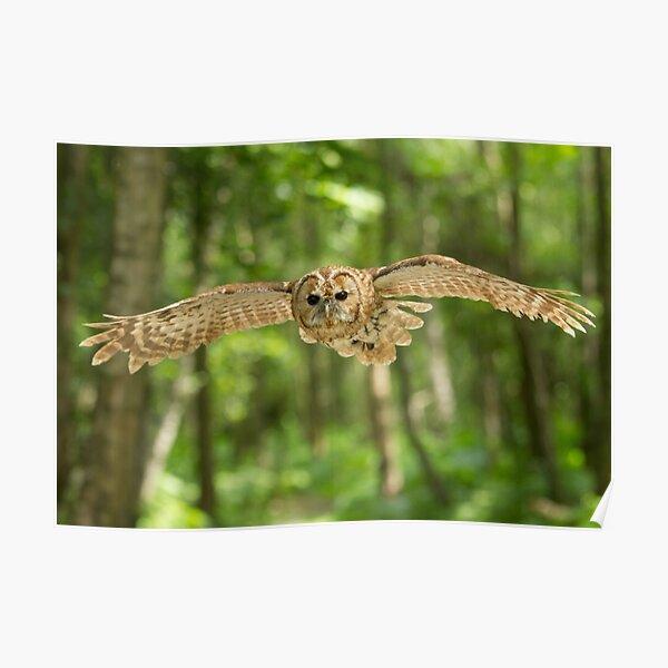 Owl flight Poster