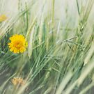 Yellow Flower in Field by Phototrinity