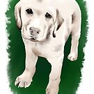 Labrador Retriever  by ragtagart