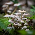 Cloudy Day  Pixie Umbrellas    by KFuoco