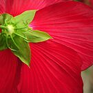 Hibiscus Back by Teresa Young