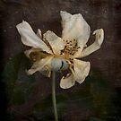 Rust 'n Roses ~ No 17 by Rosalie Dale
