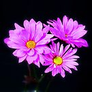 3 beautiful flowers by henuly1