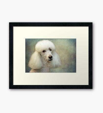 Standard Poodle Framed Print