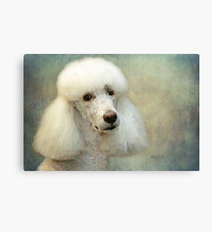 Standard Poodle Canvas Print