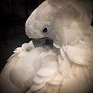 Bee - Parrot Sanctuary by parrotsanctuary