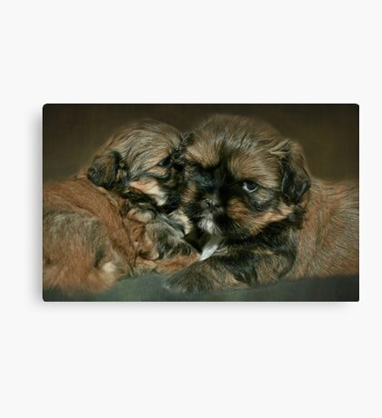 Strudel & Schnitzel.....4 weeks and 1 day old Canvas Print