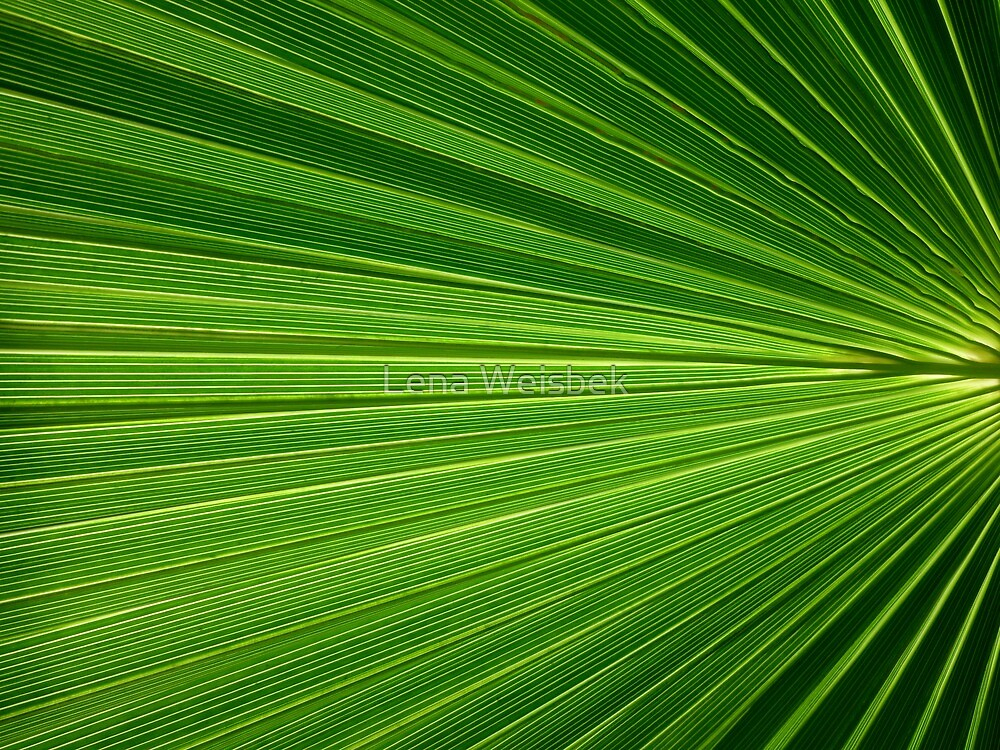 Into the Green by Lena Weiss