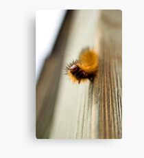 furry fella Canvas Print