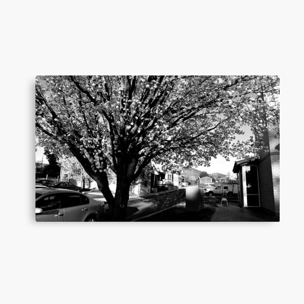 Spring Blossoms in B&W Canvas Print