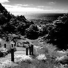 Land's End - San Francisco 8/15/2010 by Rodney Johnson