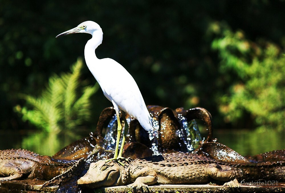 The Egret and the Alligator by Paulette1021