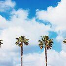 LA Palm Trees by josephhaubert