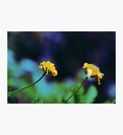 Cute Yellow Flowers Photographic Print