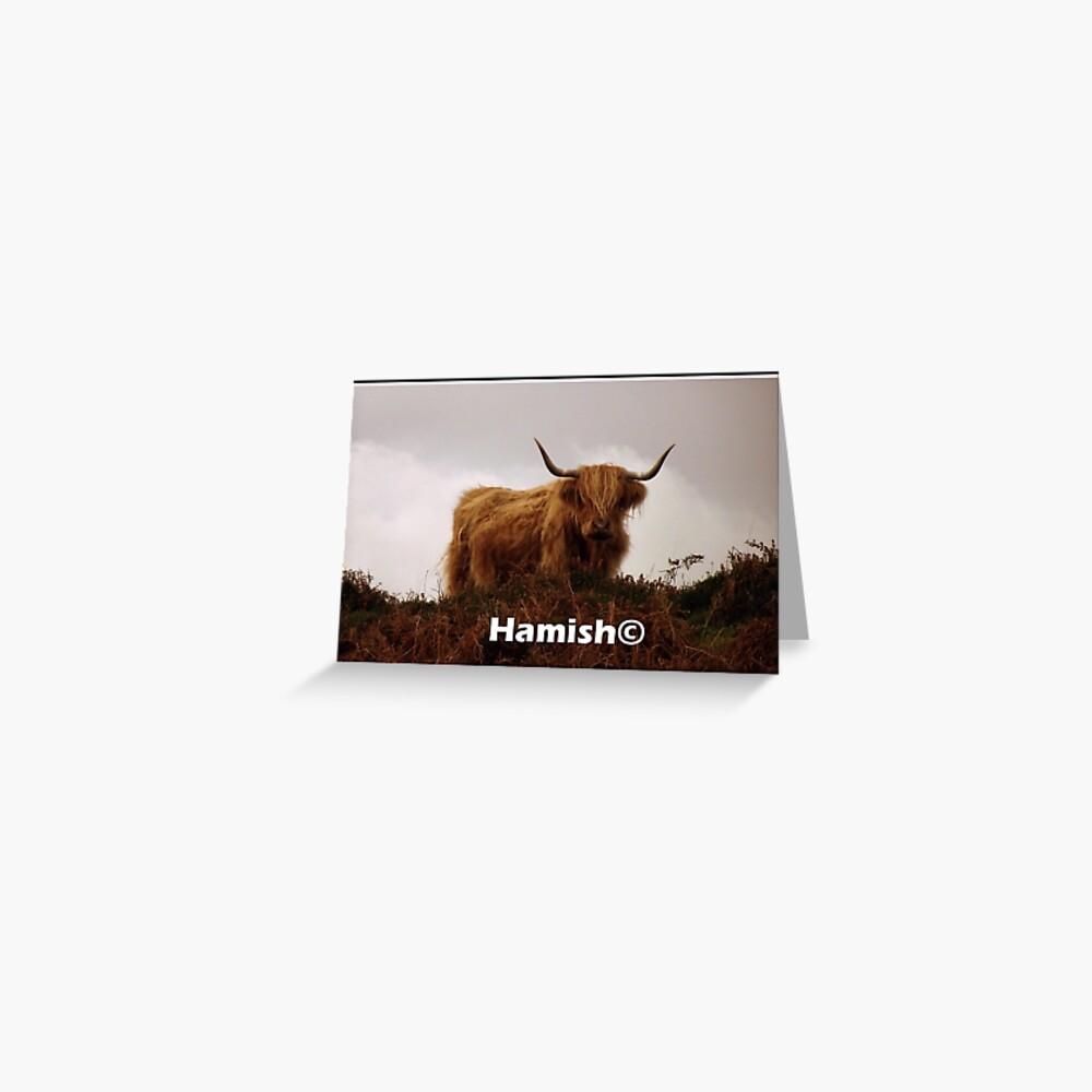 Hamish the  Hielan Coo Greeting Card