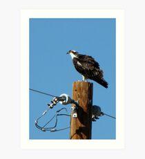 Osprey ~ Marana, AZ Art Print