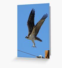 Osprey II ~ Marana, AZ Greeting Card