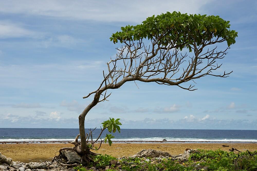 Lone Tree, Jaluit Atoll by Skye Hohmann