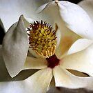 Magnolia by Jonicool