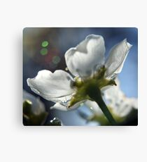 Apple Blossom With Bokeh Canvas Print