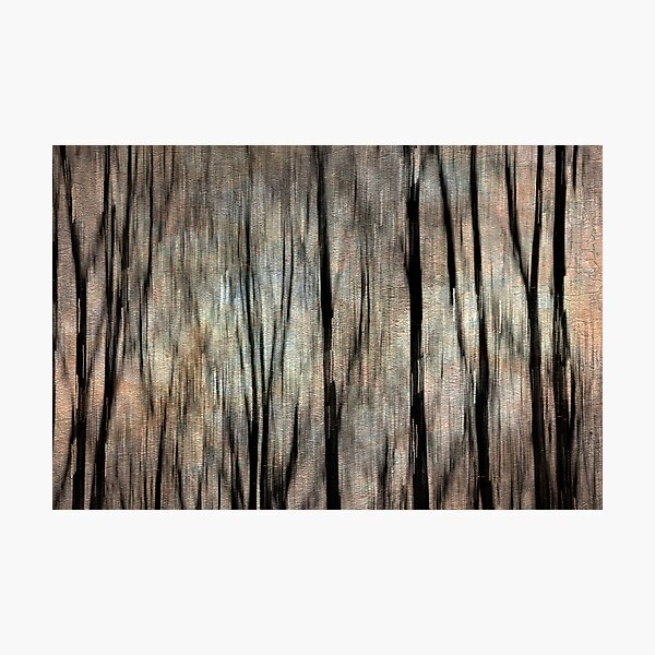 Abstract Photography - Winter Trees Photographic Print