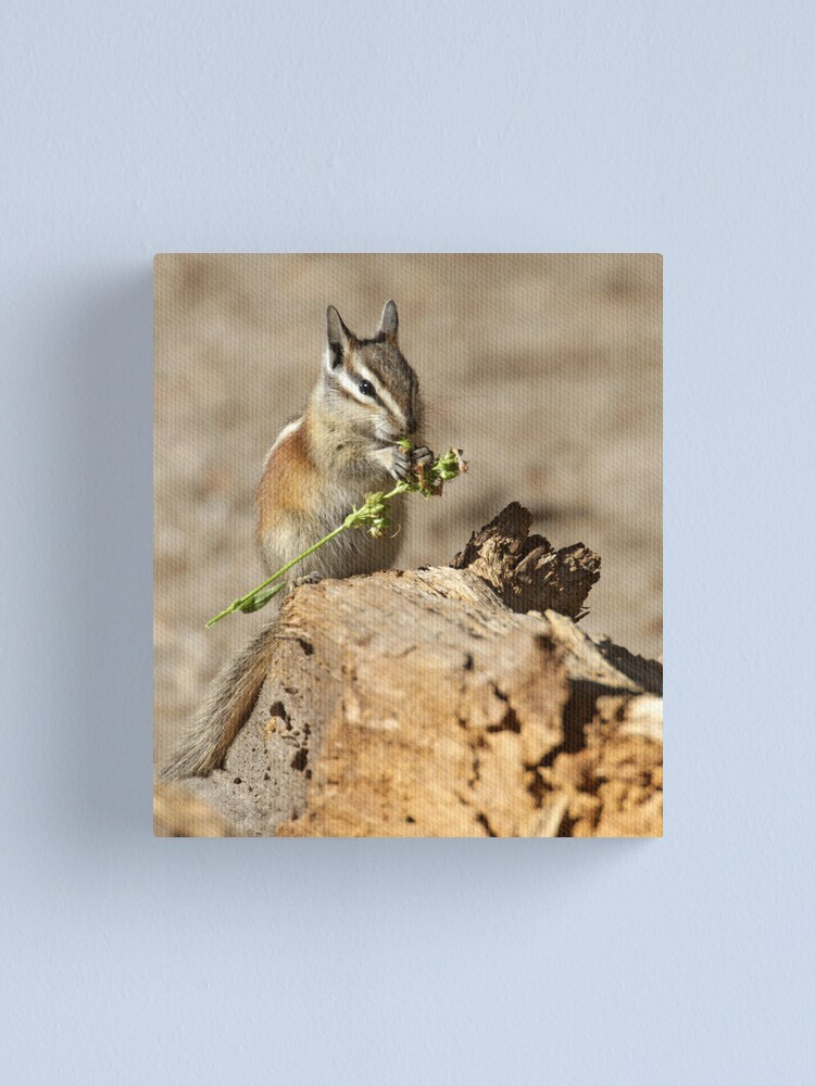 Alternate view of A feast fit for a chipmunk Canvas Print
