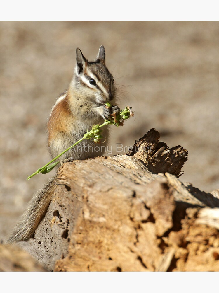 A feast fit for a chipmunk by dailyanimals