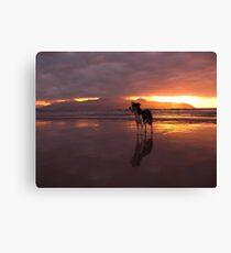 Dog on beach - The Maharees, County Kerry, Eire Canvas Print