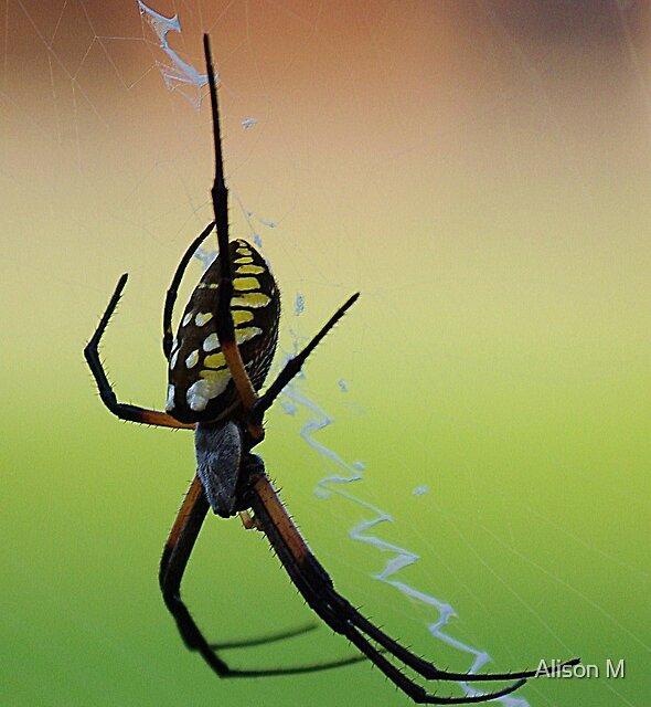 A Noiseless Patient Spider by Alison M