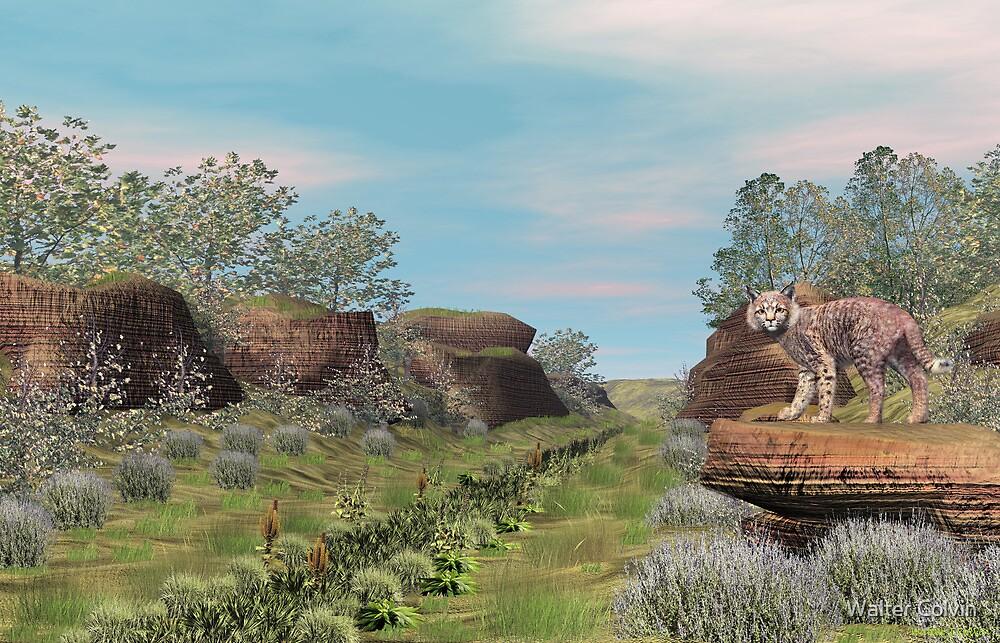 Bobcat by Walter Colvin