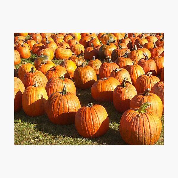 Pumpkins 'R Us Photographic Print