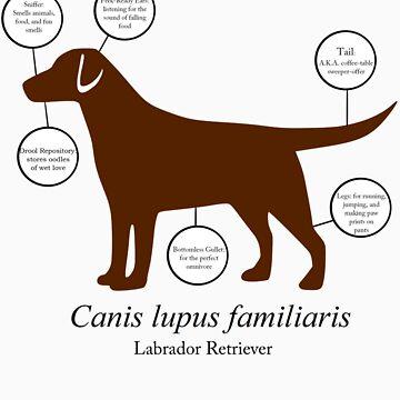 Anatomy of a Labrador Retriever by fishcakefillet