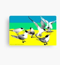 Crested Terns Canvas Print