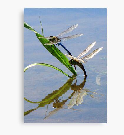 Dragonfly Love ~ Common Green Darner Canvas Print