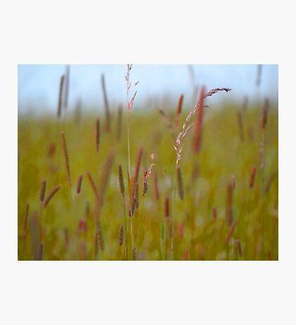 Summer grass 26 Photographic Print