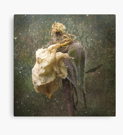 Rust 'n Roses ~ No 18 Canvas Print