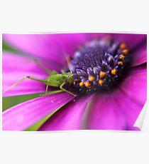 Little Spring Grasshopper Poster