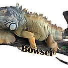 Bowser the Green Iguana by PhoenixHerp