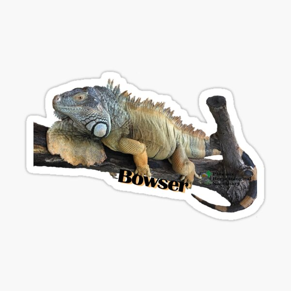 Bowser the Green Iguana Sticker