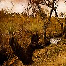 Grass Trees by pennyswork