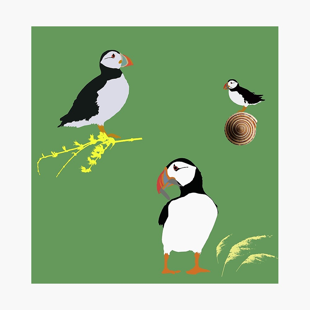 Puffins in green Photographic Print