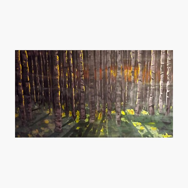 Birch forest at sunset Photographic Print