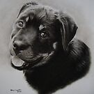 Rottweiler by Peter Lawton